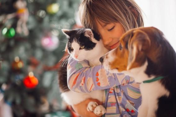 Como Saber se Seu Filho Tem Alergia a Gatos ou Outros Pets?